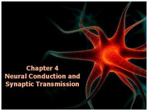 Chapter 4 Neural Conduction and Synaptic Transmission