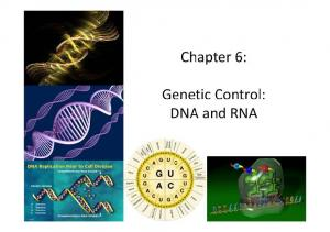 Chapter 6: Genetic Control: DNA and RNA
