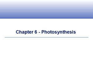 Chapter 6 - Photosynthesis