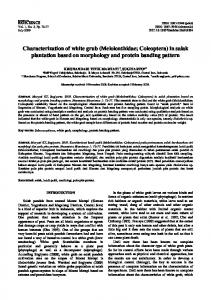 Characterization of white grub (Melolonthidae; Coleoptera) in salak plantation based on morphology and protein banding pattern
