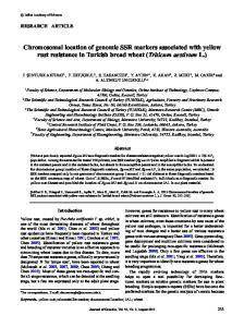 Chromosomal location of genomic SSR markers associated with yellow rust resistance in Turkish bread wheat (Triticum aestivum L.)