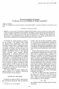 (Cichlasoma doviij en el Embalse de Arenal, Costa Rica *