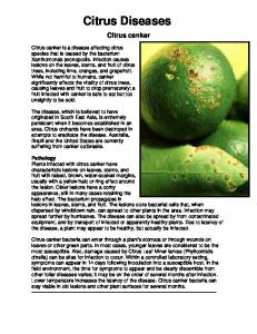 Citrus Diseases. Citrus canker