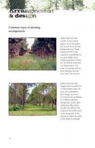 Common types of planting arrangements