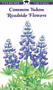 Common Yukon Roadside Flowers