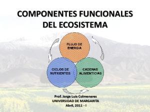 COMPONENTES FUNCIONALES DEL ECOSISTEMA. Prof. Jorge Luis Colmenares UNIVERSIDAD DE MARGARITA Abril, I