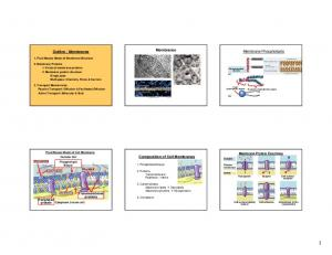 Composition of Cell Membranes