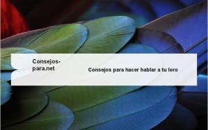 Consejospara.net. Consejos para hacer hablar a tu loro
