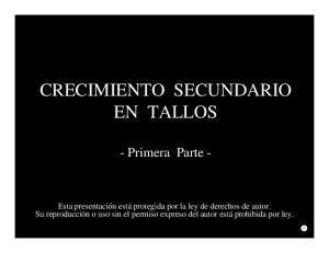 CRECIMIENTO SECUNDARIO EN TALLOS