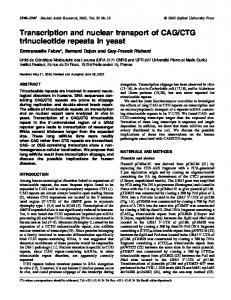 CTG trinucleotide repeats in yeast