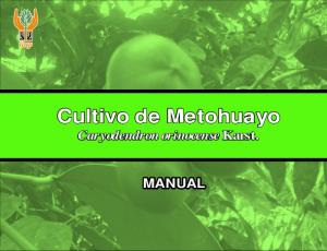 Cultivo de Metohuayo Caryodendron orinocense Karst