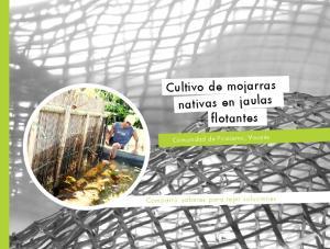 Cultivo de mojarras nativas en jaulas flotantes