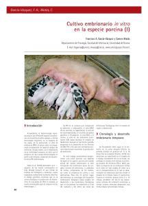Cultivo embrionario in vitro en la especie porcina (I)