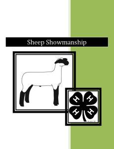 Cuts of a Market Lamb