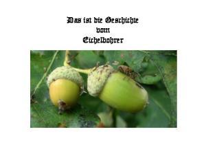 Das ist die Geschichte vom Eichelbohrer