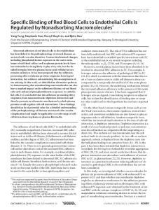 DECEMBER 24, 2010 VOLUME 285 NUMBER 52 JOURNAL OF BIOLOGICAL CHEMISTRY 40489