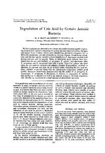 Degradation of Uric Acid by Certain Aerobic Bacteria