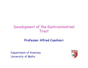 Development of the Gastrointestinal Tract