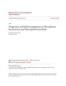 Diagnostic and field investigations in Mycoplasma hyosynoviae and Mycoplasma hyorhinis