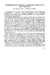 Die Ringritterlinge Tricholoma robustum (Alb. & Schw.* ex. Fr. ) und T. focale (Fr. )