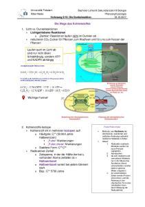 Die Wege des Kohlenstoffes