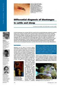 Differential diagnosis of bluetongue in cattle and sheep