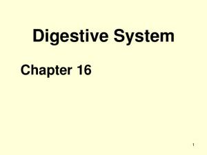 Digestive System. Chapter 16