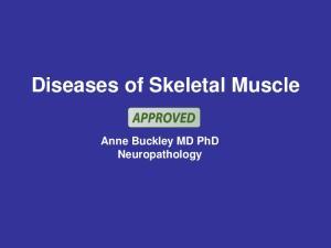 Diseases of Skeletal Muscle. Anne Buckley MD PhD Neuropathology