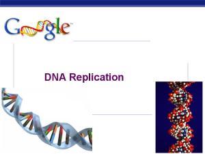 DNA Replication AP Biology