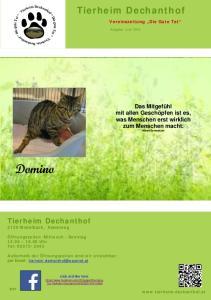 Domino. Tierheim Dechanthof. Tierheim Dechanthof