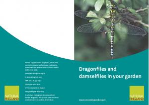 Dragonflies and damselflies in your garden