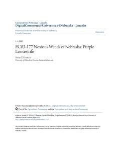 EC Noxious Weeds of Nebraska: Purple Loosestrife