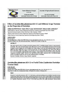 Effect of Lactobacillus plantarum AK4-11 and Different Grape Varieties on the Properties of Hardaliye