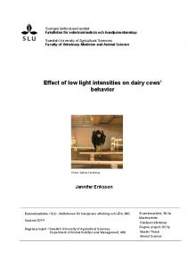 Effect of low light intensities on dairy cows behavior