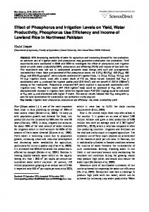 Effect of Phosphorus and Irrigation Levels on Yield, Water Productivity, Phosphorus Use Efficiency and Income of Lowland Rice in Northwest Pakistan