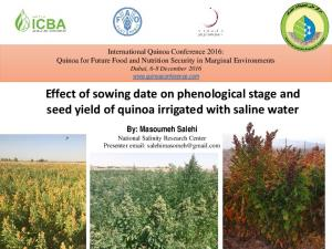 Effect of sowing date on phenological stage and seed yield of quinoa irrigated with saline water