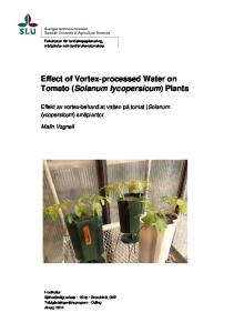 Effect of Vortex-processed Water on Tomato (Solanum lycopersicum) Plants