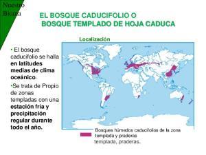 EL BOSQUE CADUCIFOLIO O BOSQUE TEMPLADO DE HOJA CADUCA
