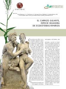 EL CARRIZO GIGANTE, ESPECIE INVASORA DE ECOSISTEMAS RIPARIOS