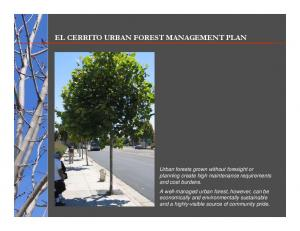 EL CERRITO URBAN FOREST MANAGEMENT PLAN