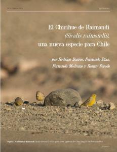 El Chirihue de Raimondi (Sicalis raimondii), una nueva especie para Chile