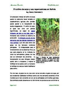 El cultivo de soya y sus repercusiones en Bolivia