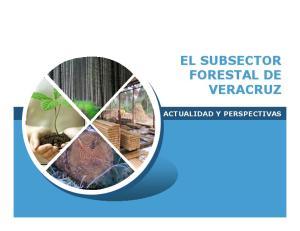 EL SUBSECTOR FORESTAL DE VERACRUZ ACTUALIDAD Y PERSPECTIVAS