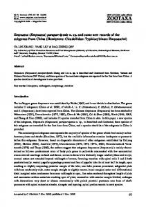 Empoasca (Empoasca) paraparvipenis n. sp. and some new records of the subgenus from China (Hemiptera: Cicadellidae: Typhlocybinae: Empoascini)