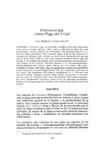 Empoasca spp. como Plaga del Frijol