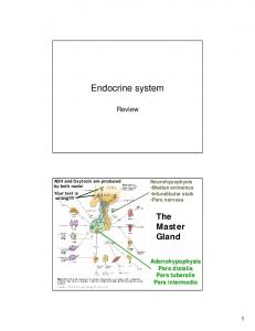 Endocrine system. The Master Gland. Review. Adenohypophysis Pars distalis Pars tuberalis Pars intermedia