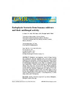 Endophytic bacteria from banana cultivars and their antifungal activity
