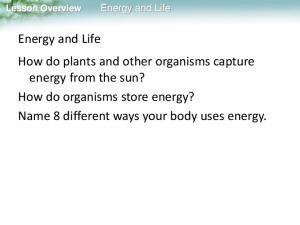 Energy and Life. Lesson Overview