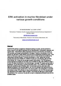 ERK activation in murine fibroblast under various growth conditions