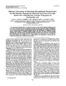 Escherichia coli. morphology (42), DNA dot-blot hybridization (34), immunoblotting